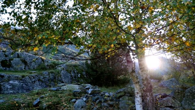 Pan up birch tree , leaves shaking in the wind, Pyrenees, Spain video