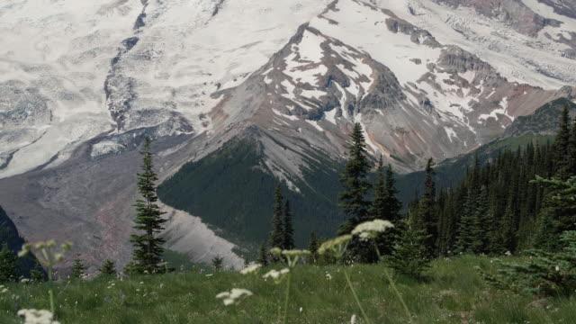 Pan Up Massive Mt Rainier on Sunny Summer Day