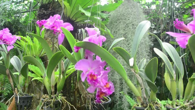 Pan zoom orchid flower in a garden. Nature video clip show fresh garden view background.
