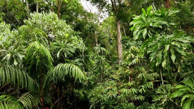 panama yağmur ormanları - kubbe stok videoları ve detay görüntü çekimi
