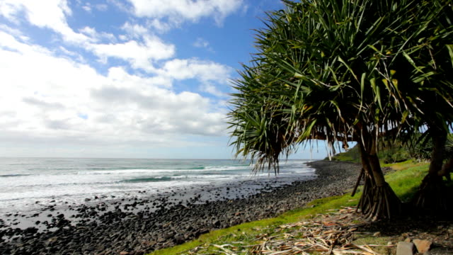 Pandanus Beach video