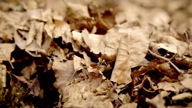 Panning across old dried leaves video