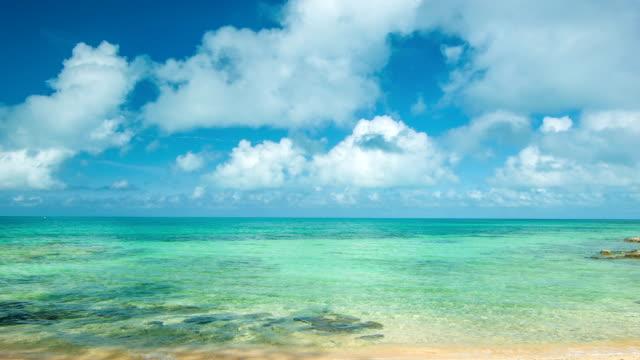 panoramica in acque tropicali bermudiano - soldato semplice video stock e b–roll