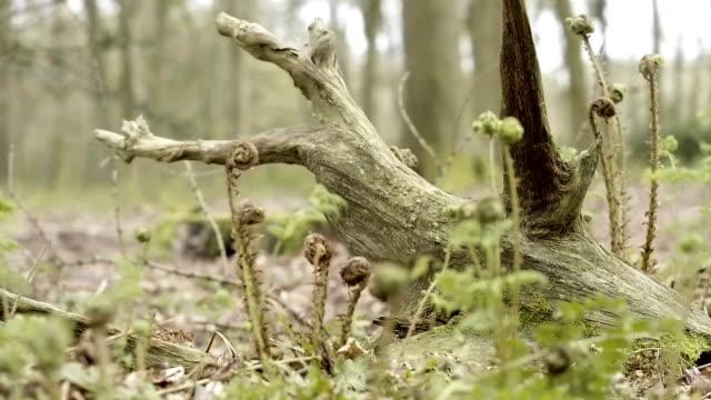 Panning around an old tree stump video