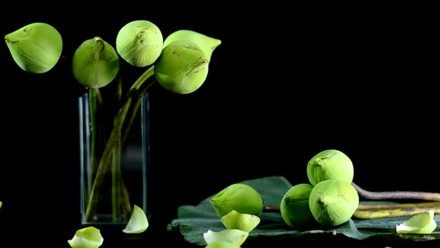 panning : arranged lotuses in a glass vase and on their leaf video