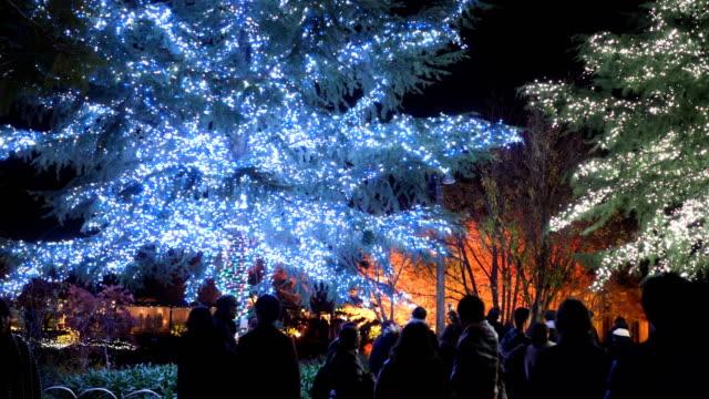 パン:夜のクリスマスツリー - クリスマスツリー点の映像素材/bロール