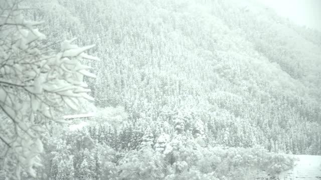 panorering: tät skog omfattas av snötäcket berget på shirakawago village - panorering bildbanksvideor och videomaterial från bakom kulisserna