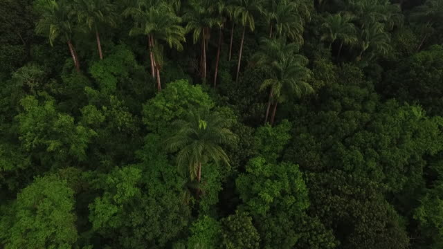 Panning down a lush tropical forest video