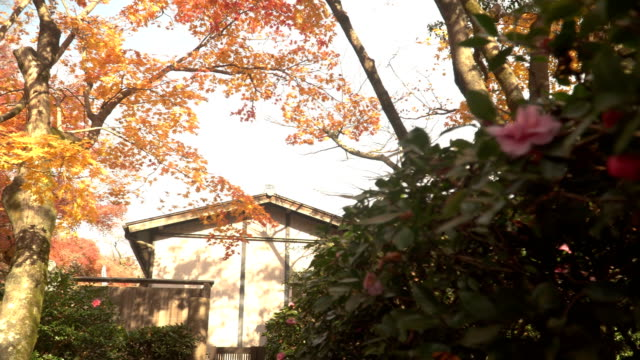panning: Japanese house have maple garden on the back of it video