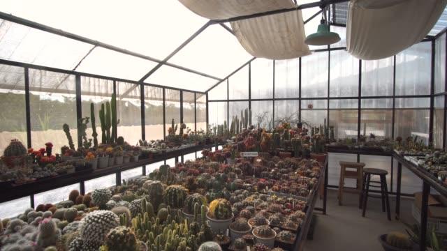 多肉植物のコレクションの左のパン - 豊富点の映像素材/bロール