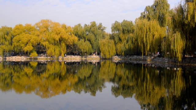 panning: many colorful tree reflecting on lake of  Yuanmingyuan video