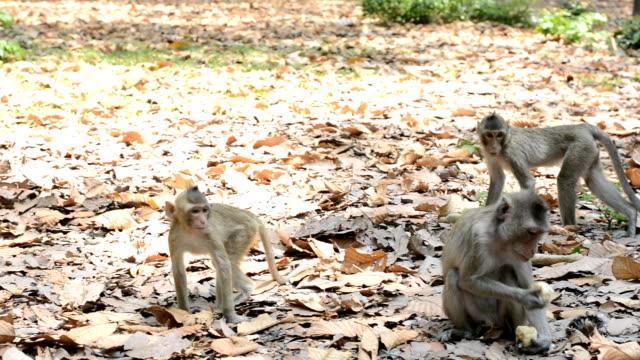 panorering rörelse, liv av apor i vilt - djurfamilj bildbanksvideor och videomaterial från bakom kulisserna