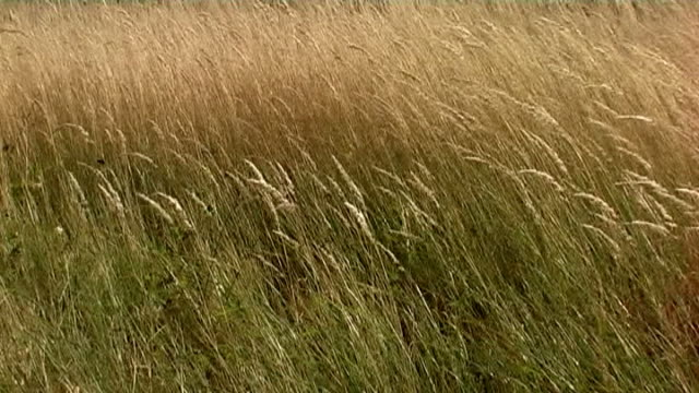 Panning of autumn grass in the breeze video