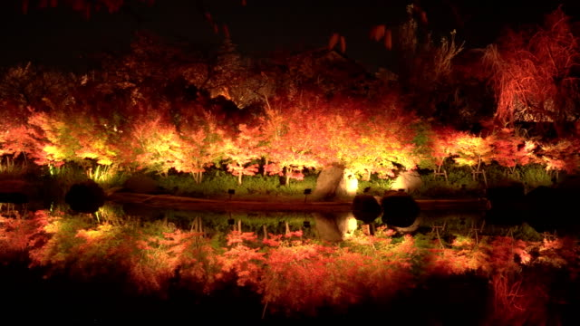 panning: orange and red light decorated maple tree reflection on still pond at night panning: red maple tree reflection on still pond at night, Nagoya, Japan maple leaf videos stock videos & royalty-free footage