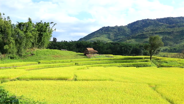 HD Panning: Rice plantations in the mountains. video