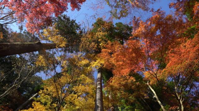 流し撮り: 秋赤を残して背景こうらんけい森林公園名古屋 - トヨタ点の映像素材/bロール