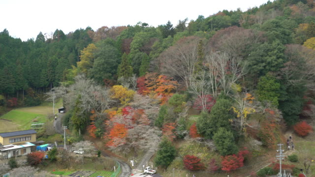 流し撮り: 秋赤まま小原トヨタ名古屋 - トヨタ点の映像素材/bロール