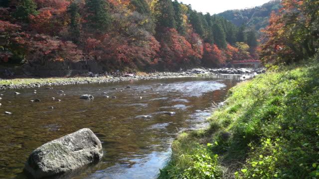 流し撮り: 秋赤のまま名古屋でこうらんけい森林公園 - トヨタ点の映像素材/bロール