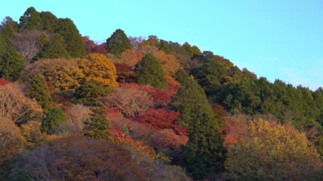 秋の赤のまま名古屋でパンのショットこうらんけい森林公園 - トヨタ点の映像素材/bロール