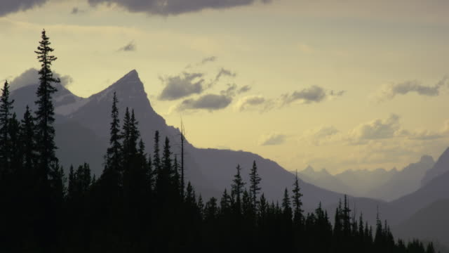 vídeos y material grabado en eventos de stock de panning shot of a forest and the canadian rocky mountains near jasper national park at sunset in alberta, canadá - conífera