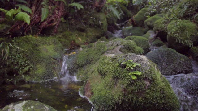 Panning shot of a small stream with rocks and ferns in a dense forest