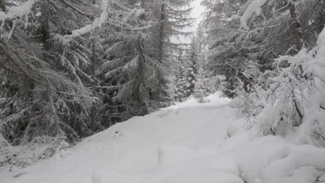 Panning shot of a snowy path and trees