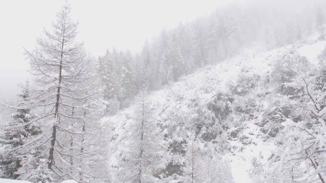 Panning shot of a snowy valley with covered trees in a heavy snow storm