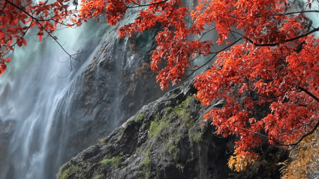 Panning shot of amazing in nature, beautiful waterfall at colorful autumn forest in fall season