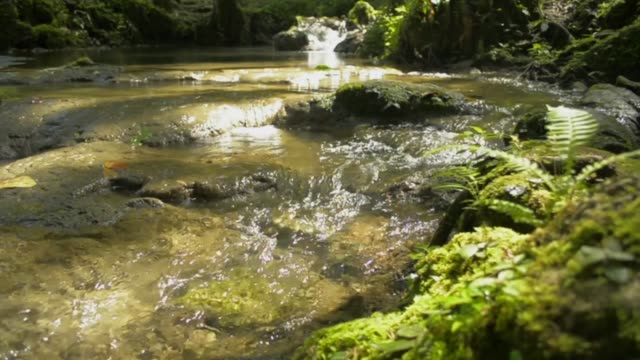 Panning shot of fresh water flows from cascade over the rocks through green plant under sunlight in fertile forest. The abundance of tropical rain forest with small river surrounded by lush foliage vegetation.