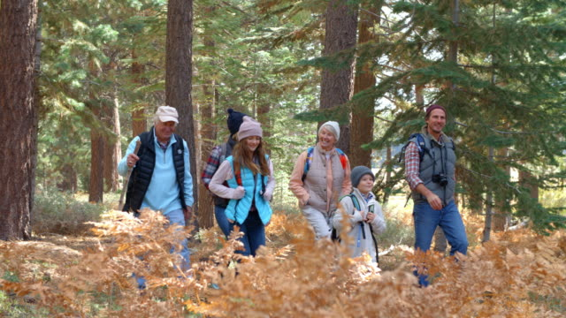 Panning shot of multi generation family walking in a forest video