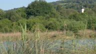 istock Panning shot of tall grass on the side of a lake with town behind 1291843514