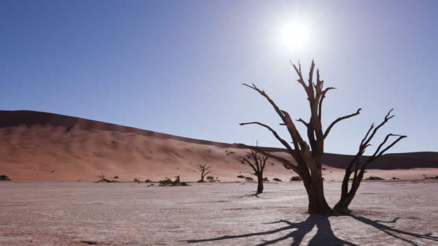 Panning shot of tree shadow and sun setting behind a dead tree in Sossusvlei video