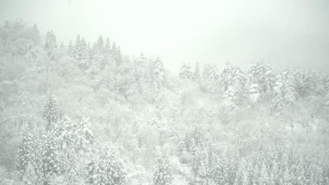 パン: 白川郷村で山の雪に覆われた森 - 雪が降る点の映像素材/bロール