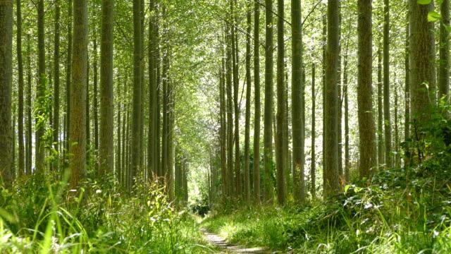 Panning through a forest video