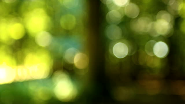 Panning through forest video