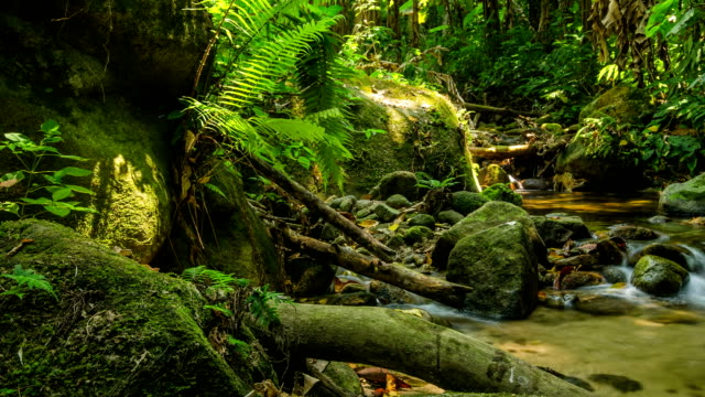 panning: tiny waterfall in summer of tropical forest video