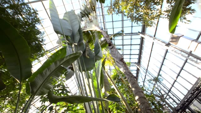 panning : tropical forest in greenhouse video