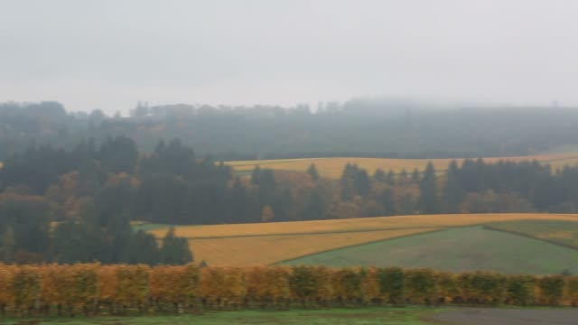 Panning video of vineyards in Dundee OR during colorful autumn season 1080p HD video