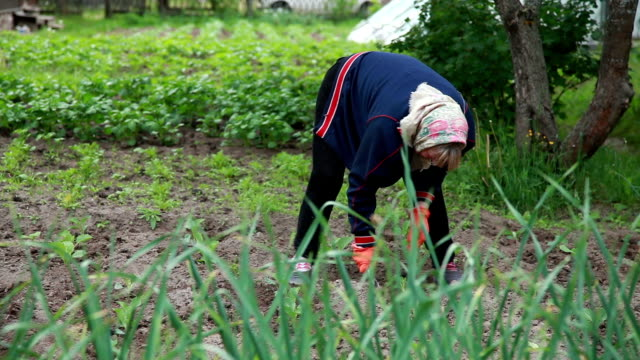 Panning view of woman weeding the plants with a hoe video