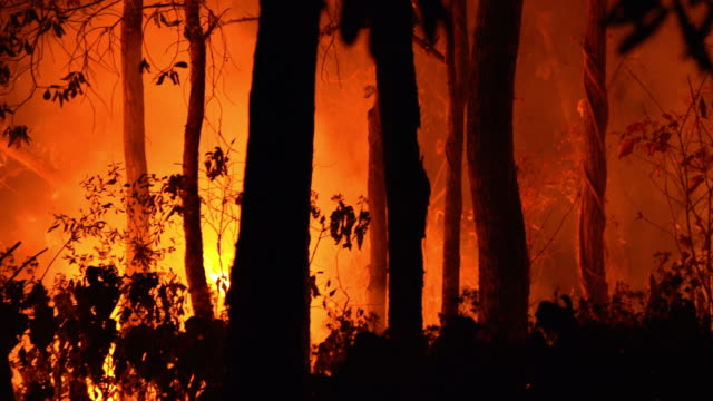Panning CU Wildfire forest fire at night in the Panning CU Wildfire forest fire at night in the australia stock videos & royalty-free footage