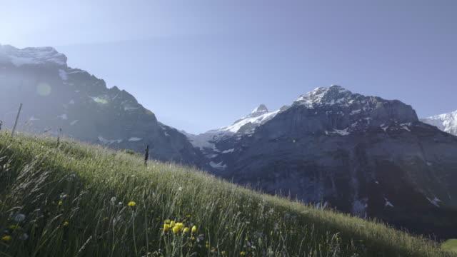 guldvaskning-den tidiga morgonsolen på eiger-berget grindelwald schweiz - grindelwald bildbanksvideor och videomaterial från bakom kulisserna