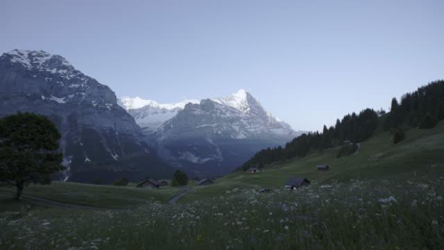 guldvaskning-vilda blommor fält framför eiger berg grindelwald schweiz tidigt på morgonen - grindelwald bildbanksvideor och videomaterial från bakom kulisserna