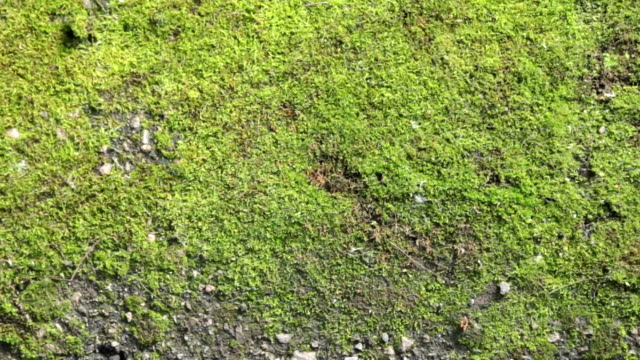 Panorama fresh green moss. Texture and background