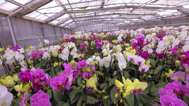 Panorama of a new greenhouse with a glass roof. Panorama of a modern greenhouse with blooming archdeis,
