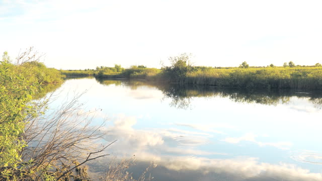 Panorama of a small river on Sunny day video