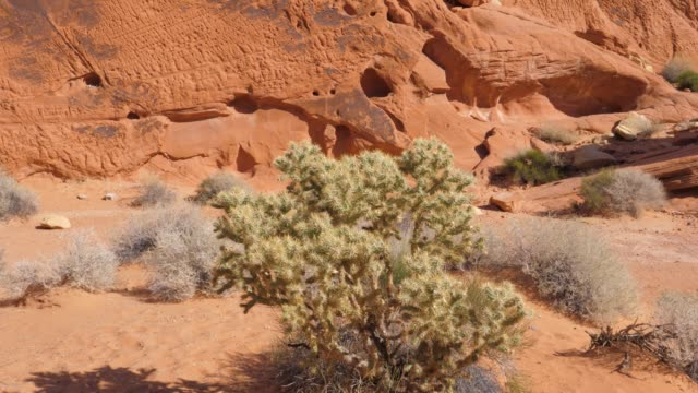 panorama of close-up cactus on the sand mojave desert red rock canyon - red rock canyon national conservation area video stock e b–roll
