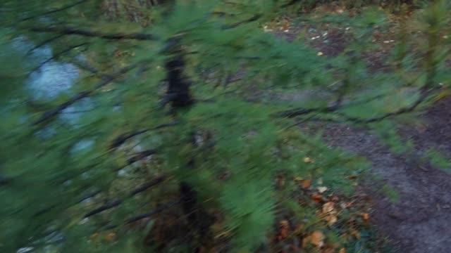 森林ストリームや秋の雨の日にアルタイ山脈で青い間欠泉湖のパノラマ ビデオ