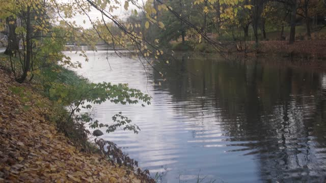 панорама осеннего озера в парке. - спокойная вода стоковые видео и кадры b-roll