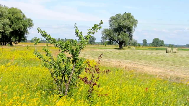 Panorama of the countryside. video
