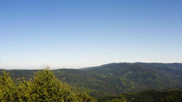 bir ağaç gölgelik panorama çekim - sale stok videoları ve detay görüntü çekimi